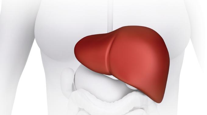 La ferritina y el hígado graso. Lo que necesitas saber » FERRITINA